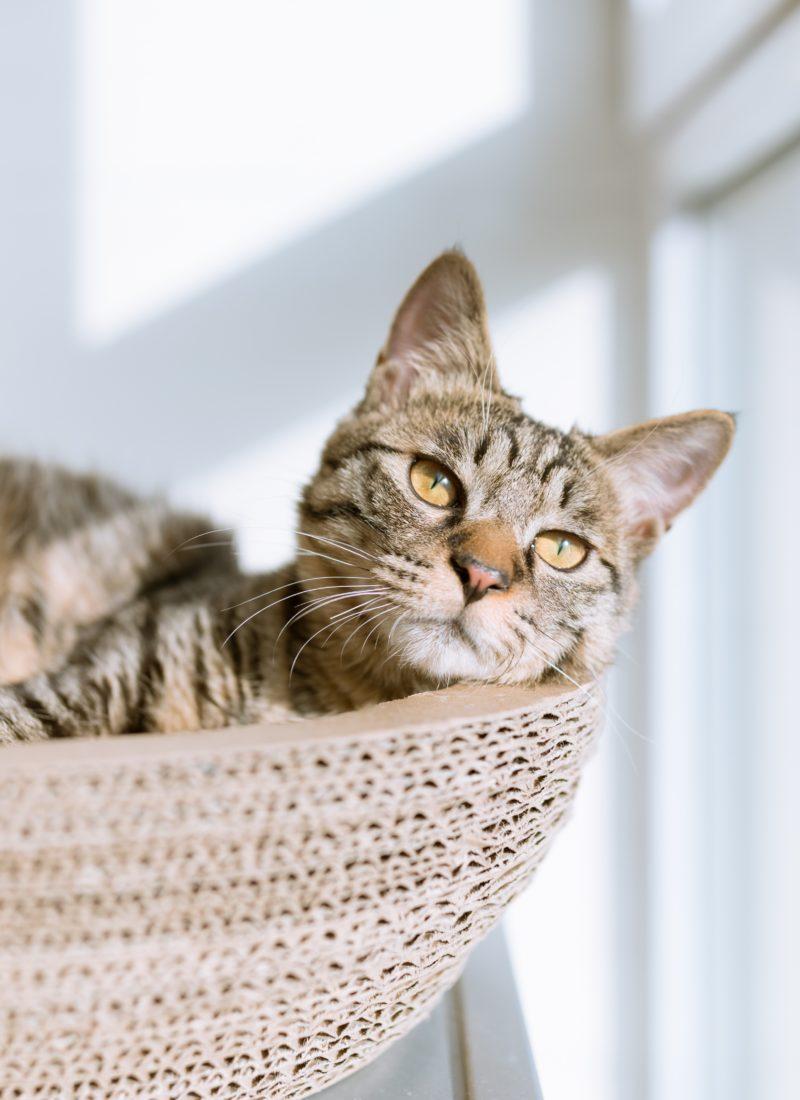 Adopter un animal (choses à savoir)